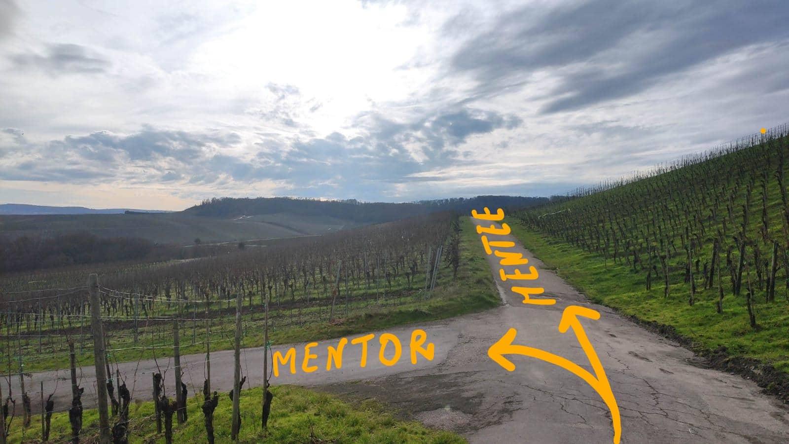 different way mentor mentee